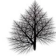 Fractal Essence Of A Tree Art Print