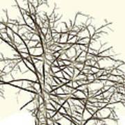 Fractal Ghost Tree - Inverted Art Print by Steve Ohlsen