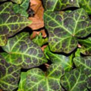 Fractal Ivy Art Print