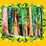 Framed Sequoias Art Print