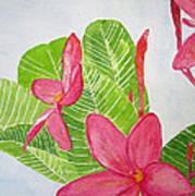 Frangipani Tree Art Print