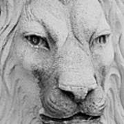 Frankie Lion Art Print