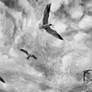 Freedom Impasto Bw Art Print