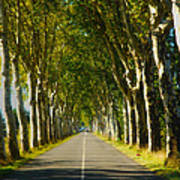 French Road Near Gaillac Art Print