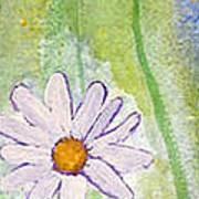 Fresh As A Daisy 1. Art Print
