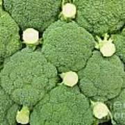 Fresh Broccoli Pattern Art Print