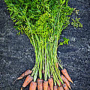 Fresh Carrots From Garden Print by Elena Elisseeva