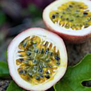Fresh Cut Lilikoi Fruit Art Print