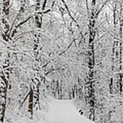 Fresh Fallen Snow Art Print
