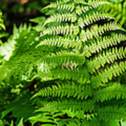 Fresh Fern - Featured 2 Art Print