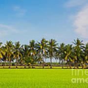 Fresh Green Rice Field Art Print