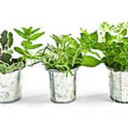 Fresh Herbs In Pots Art Print by Elena Elisseeva