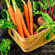 Fresh Picked Healthy Garden Vegetables Art Print