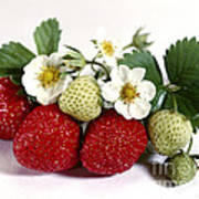Gardenfresh Strawberries Art Print