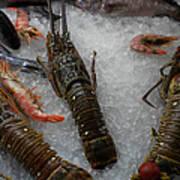 Fresh Santorini Lobsters Art Print