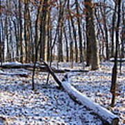 Fresh Snow In The Woods Art Print