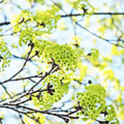 Fresh Spring Green Buds Art Print