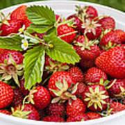 Freshly Picked Strawberries Art Print