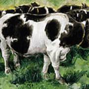 Friesian Cows Art Print