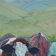 Friesian Holstein Cows Art Print