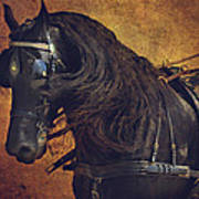 Friesian Under Harness Art Print by Lyndsey Warren