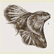Frilled Lizard Art Print