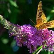Fritillary Butterfly  Art Print