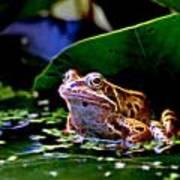 Frog 2 Art Print