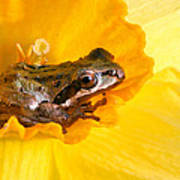 Frog And Daffodil Art Print by Jean Noren
