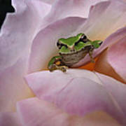 Frog And Rose Photo 1 Art Print