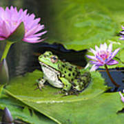 Frog And Water Lilies Art Print