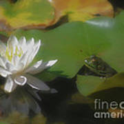 Frog And Water Lily Art Print