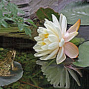 Frog In Awe Of White Water Lily Art Print