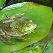 Frog On Lily Pad Photo Art Print