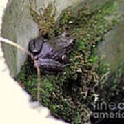 Frog On Moss On Wall Art Print