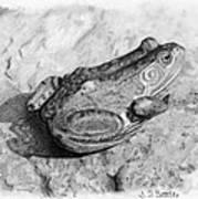 Frog On Rock Art Print