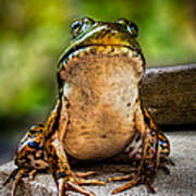 Frog Prince Or So He Thinks Art Print