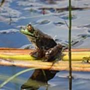 Froggy Reflections Art Print