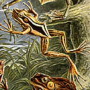 Frogs Detail Art Print