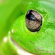 Frog's Eye Art Print by Kaye Menner