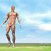 Front View Of Male Musculature Walking Art Print