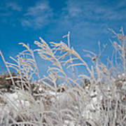 Frost Covered Grasses Against The Sky Art Print