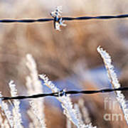 Frosted Fence Line Art Print