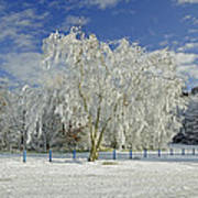 Frosted Trees - Newton Road Park Art Print