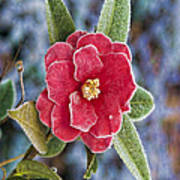 Frosty Camellia - Phone Case Design Art Print