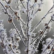 Frosty Field Plant Art Print