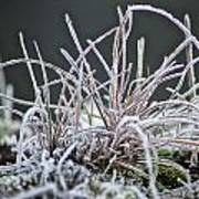 Frosty Grass Art Print by Karen Grist