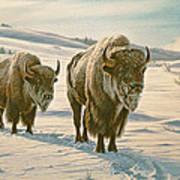 Frosty Morning - Buffalo Art Print