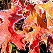 Frosty Oak Leaves Art Print