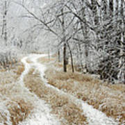 Frosty Trail 2 Art Print